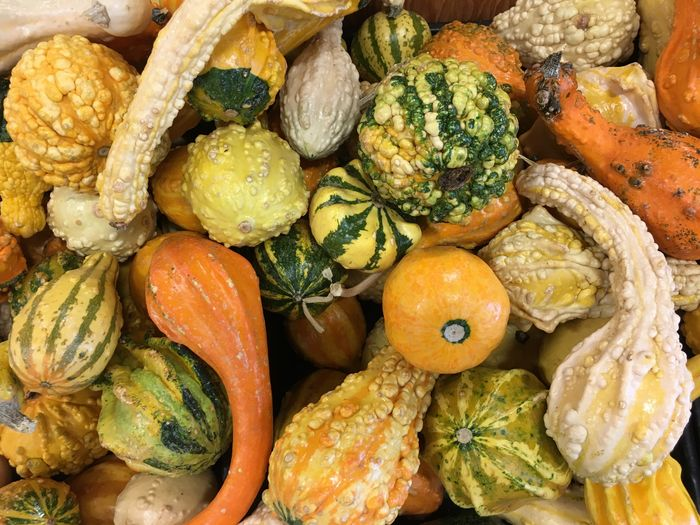 Food And Drink Variation Vegetable Healthy Eating Food No People Market Freshness Large Group Of Objects Pumpkin Choice Close-up Day Indoors  Squash - Vegetable Autumn Autumn Colors Harvest Harvest Time Gourd Thanksgiving Fall_collection Bounty Native American Indian Squash