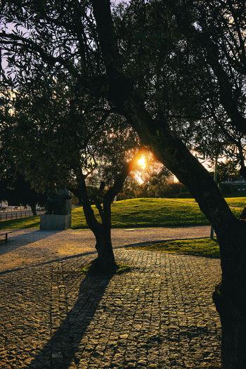 Shadow of tree on footpath in park