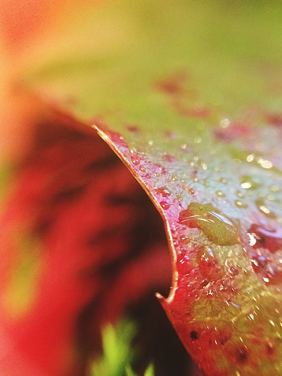 nature, close-up, water, growth, beauty in nature, freshness, plant, fragility, no people, leaf, outdoors, day, flower