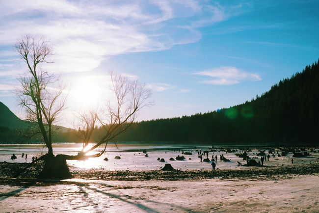 Brrrr Nature Water Landscape Beauty In Nature Sunsets Washington State Frozen Nature Livewashington Winter Nature PNW Lake Frozenlake PNWonderland Cloud - Sky Trees And Sky Tree_collection  Rattlesnake Lake Stump Lensflare Sky Scenics Outdoors