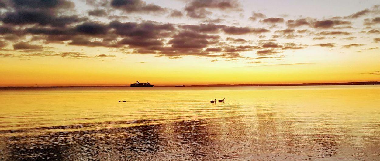 Beautiful afternoon in Helsingborg❤ Swans Peacfull Place Water Sea Sunset Beach Low Tide Summer Horizon Silhouette Sun Wave Romantic Sky Seascape Coast Atmospheric Mood