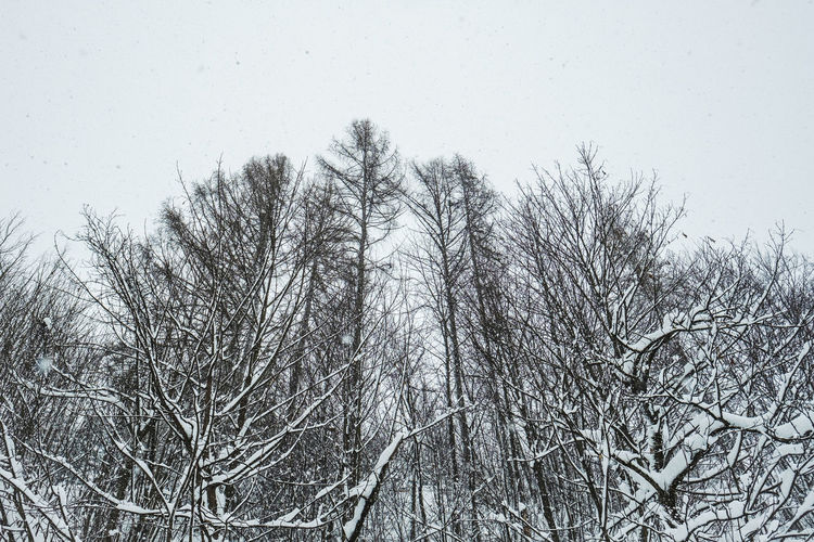 Tree Bare Tree Plant Sky Cold Temperature Branch Winter No People Tranquility Nature Snow Beauty In Nature Low Angle View Day Clear Sky Tranquil Scene Outdoors Scenics - Nature Frozen Snowing