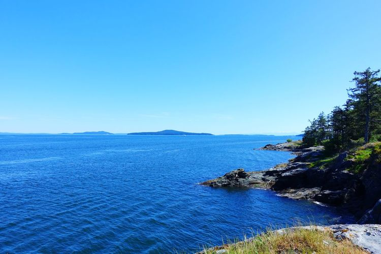 Salt Spring Island Canada Travel Abventure Exploring Hiking Sunny Day Freshness Forest Nature Sky Sea
