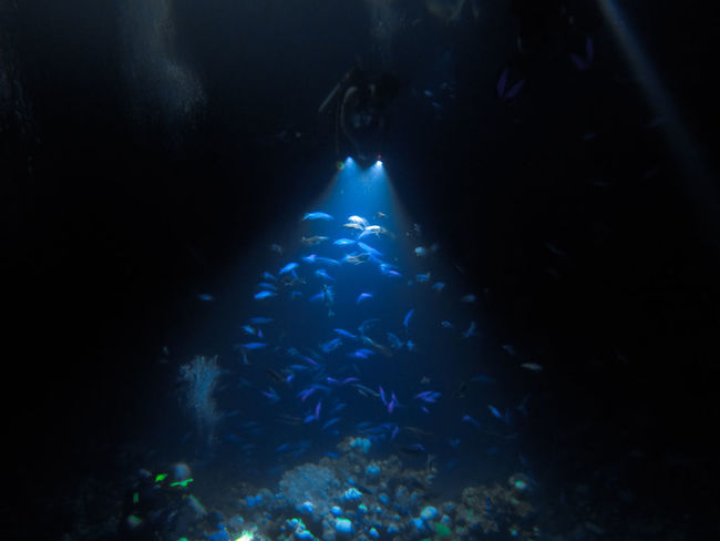 Night Diving Aquarium Beauty In Nature Blue Close-up Fish Glowing Nature Nature No People People Of The Oceans Rippled School Of Fish Sea Life Swimming UnderSea Underwater Water