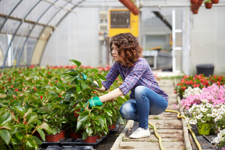 Woman holding flower pot at greenhouse