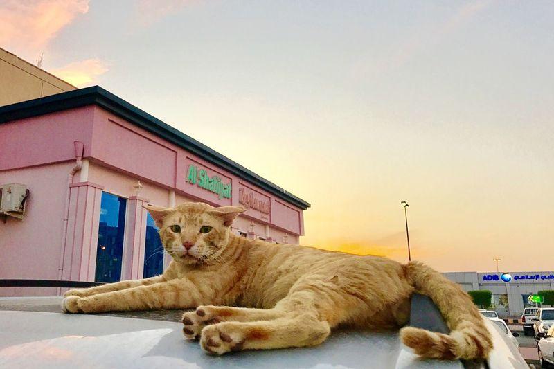 pretty cat. Pets First Eyeem Photo