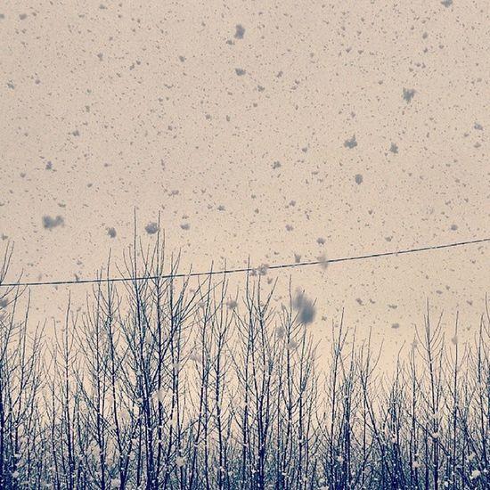 Blizzard in April Vrn Voronezh