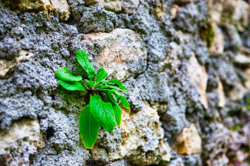Close-up of plant growing on rock