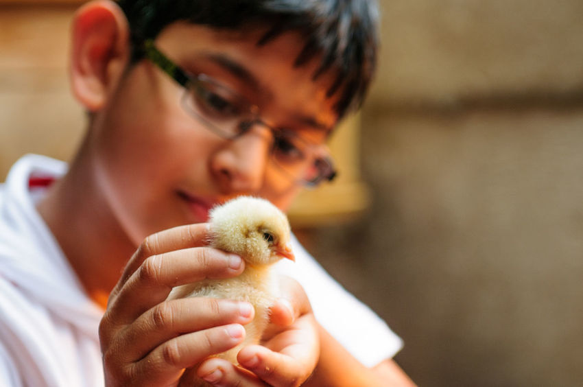Tender Love and Care Animal Themes Baby Birds Boys Chick Childhood Focus On Foreground Holding Human Hand One Animal One Boy Only One Person Tender Love And Care Tender Moments Young Adult