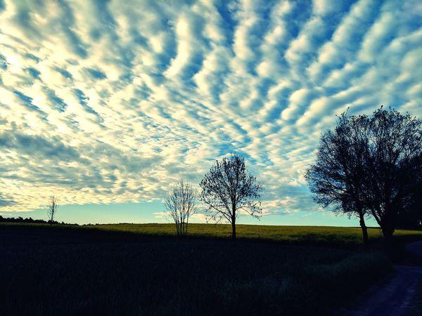 Ein Meer voller Wolken A Sea Of Clouds