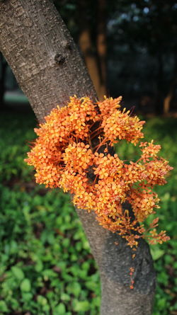 Spike Flower Beauty In Nature Growth Nature Outdoors Plant Thai Flowers