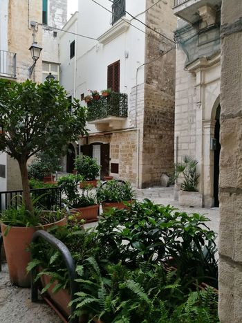 Enjoying Life Letstravel No People Outdoors Architecture Look Around  Interesting Places Travel Destinations Lets Travel Nature Colors ıtaly Italia Bari Vecchia Green Plants