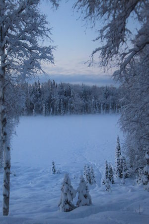 Alaskan Nature Frozen Lake Bare Tree Beauty In Nature Cold Cold Temperature Day Frozen Landscape Nature No People Outdoors Scenics Sky Snow Tranquil Scene Tranquility Tree Weather Winter