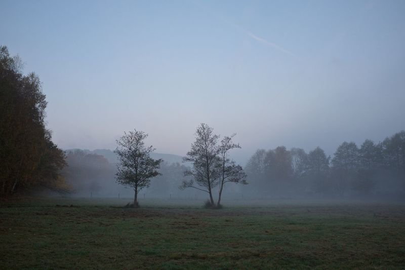 Foggy Morning Autumn Beauty In Nature Day Early Morning Foggy Morning Herbst Landscape Nature Nebel No People Outdoors Sonnenstrahlen Sunrays Tree Trees