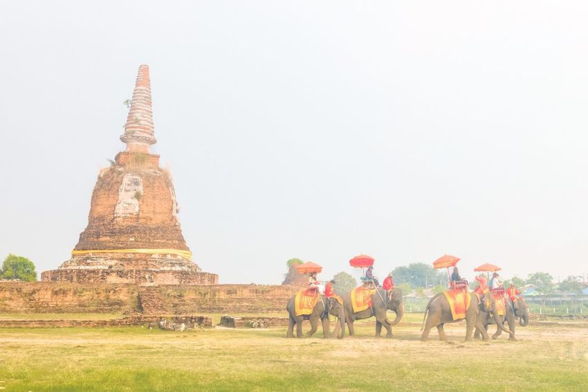 The elephant riding with Thai ancient mahood costume with old Pagoda an morning fog effect background in Ayuthaya Thailand February 20,2018 Asian  Grass Riding Elephant Pagoda Foggy Morning Group Of Elephants Thailand Ayutthaya MaHood Histrorical Park Bangkok Tourist Sky Parade Traditional Sky Mammal Built Structure Domestic Domestic Animals Plant Group Of People Animal History Religion Nature Place Of Worship Animal Themes Travel Destinations