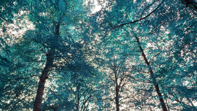 Turquoise forest Tree Low Angle View Turquoise Nature Beauty In Nature Branch Full Frame Day Backgrounds No People Outdoors Tree Trunk Close-up Sky Tranquility EyeEmNewHere Photography EyeEm Selects Eyeemphotography Scenics Followme Art Yedigöller Milli Parkı Turkey Flower