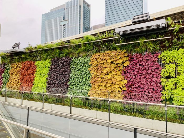 Multi colored flowering plants in city
