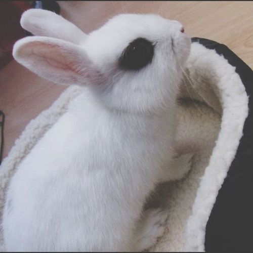 Clochette❤️? Rabbit Love
