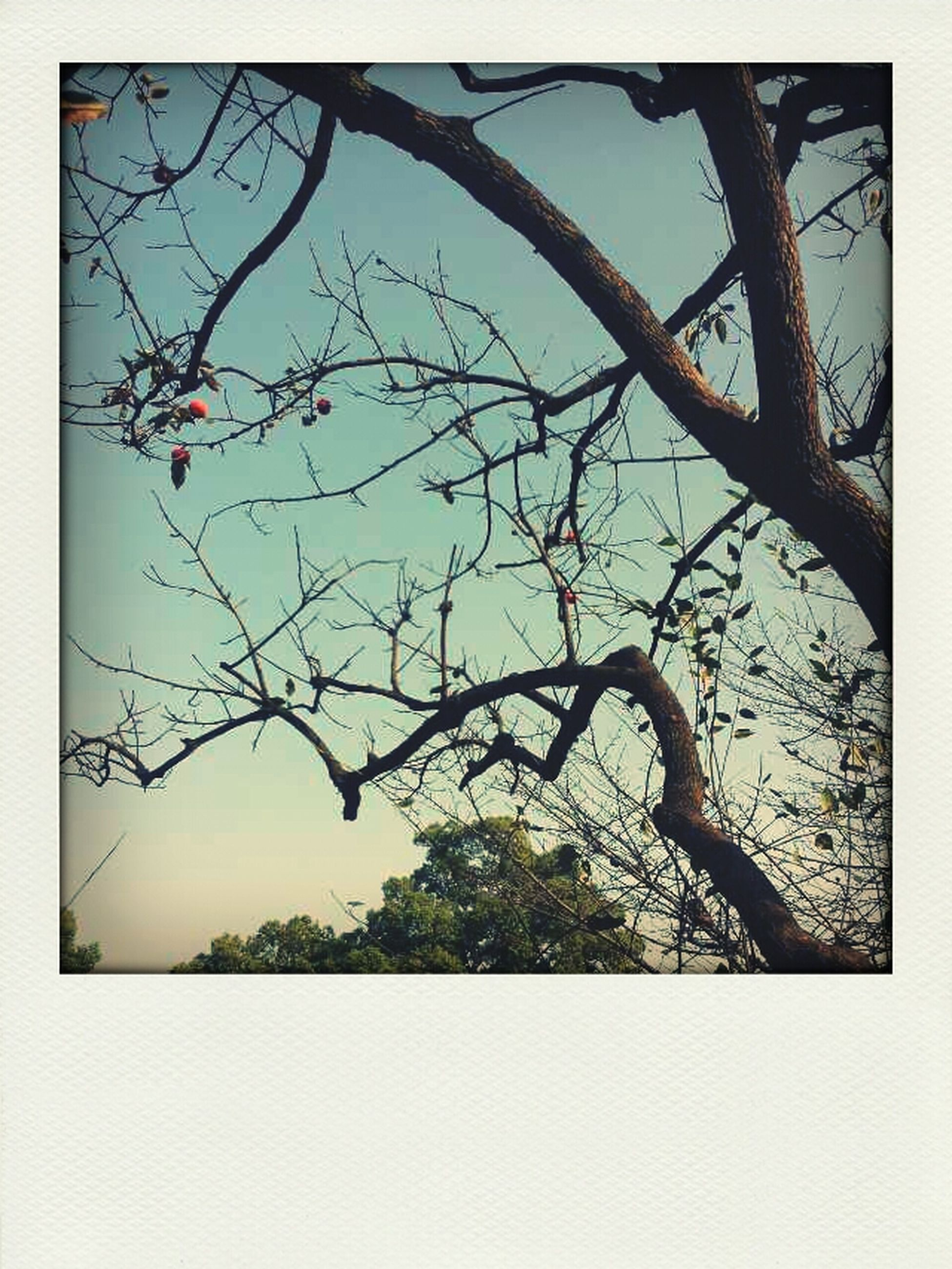 transfer print, auto post production filter, branch, tree, bare tree, nature, low angle view, growth, beauty in nature, tranquility, sky, outdoors, day, no people, clear sky, scenics, twig, tranquil scene, close-up, plant