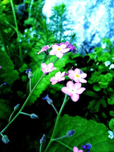 Flower Beauty In Nature Plant Outdoors No People Nature Day Green Color First Eyeem Photo