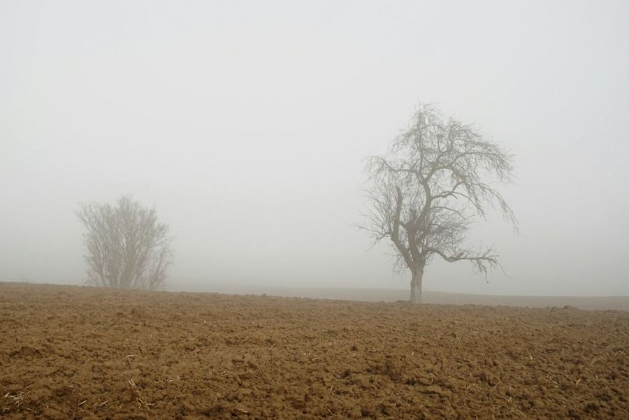 foogy trees Tree Nature Tranquility Fog Landscape Beauty In Nature Sunday Morning Foggy Morning Würzburg Winter 2017 Out In The Fields Outdoor Photography Sony A6000 Tristesse