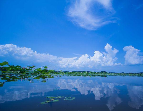 Cloud Lake Lotus Lotus Flower Nature Sky Water Surface 伊豆沼