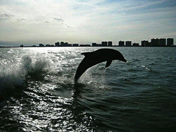 Enjoying Life Florida USA Miami Animal Dauphin Dolphins Miami Beach Holidays