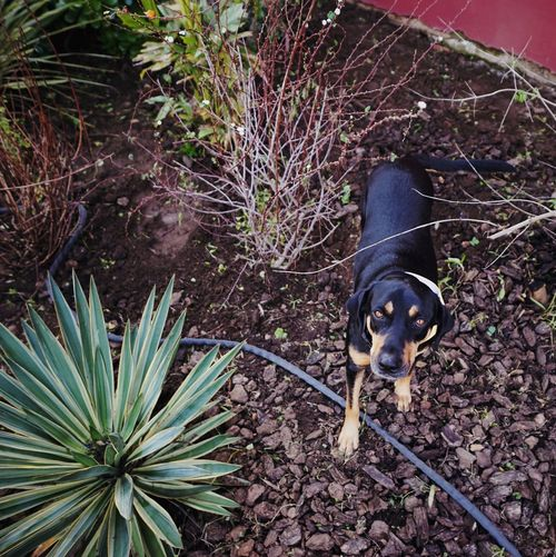 Oh hai, dog One Animal Dog Domestic Canine Mammal Pets Domestic Animals Animal Themes Animal High Angle View Outdoors No People