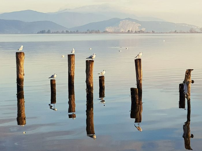 Pássaros Passaro Laggo Puccini Lake Italia Viagem Lugares Lucca Italy Water Beach Wooden Post Wood - Material Sky My Best Photo Humanity Meets Technology
