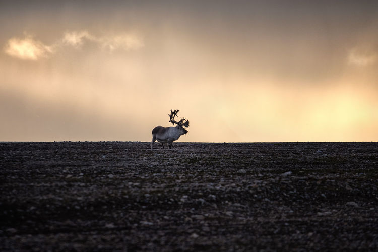 View of horse on land against sunset sky
