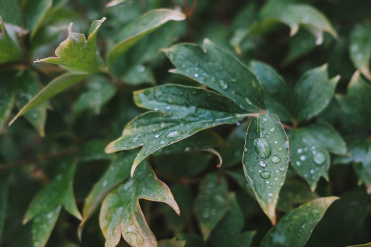 Leaf Plant Part Growth Beauty In Nature Wet Nature Water Green Color No People Freshness Drop Day Close-up Dew Leaves RainDrop Purity Outdoors Plant Background Background Texture One Color Lush Foliage Clean