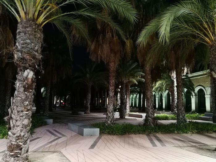Palm Tree Arch