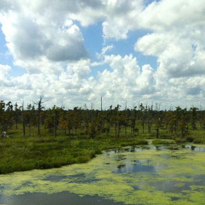 Reflection Clouds Nature Trees Empty Outdoors Marsh Louisiana Bayou South Swamp Wetlands Kenner Cumulus Deepsouth Nexus_green Oldsouth Rsa_green Onlylouisiana Louisianatravel Cumulusclouds Jj_louisiana_039 We_shoot_louisiana