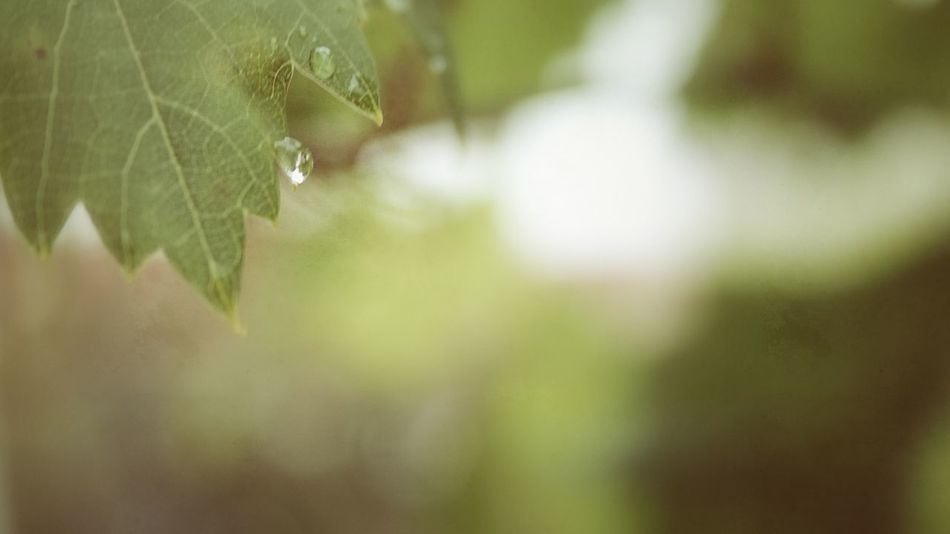 Beauty In Nature Blur Blury Bright Close-up Colorful Focus On Foreground Fragility Green Color Leaf Nature Nature Rain Raindrops Sun Light Tree Unclear Wallpaper Background BYOPaper! Sommergefühle Perspectives On Nature Be. Ready.
