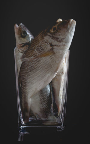 Bream trapped in rising stock prices. Raw fishes in empty vase. Black Background Bouquet Bream Buy Caught Close-up Empty Equity Escape Flowerpot Fraud Growth High Price Indicies Market No Exit One Animal Present Raw Fish Return Sell Shares Silver  Stock Vase