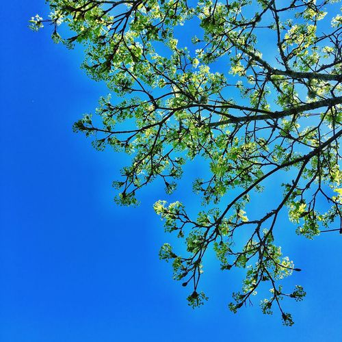 Blue Sky Taking Photos TreePorn Spring Blue Park Blooming PNW Kingston Wa Around You Neighborhood Clear Sky