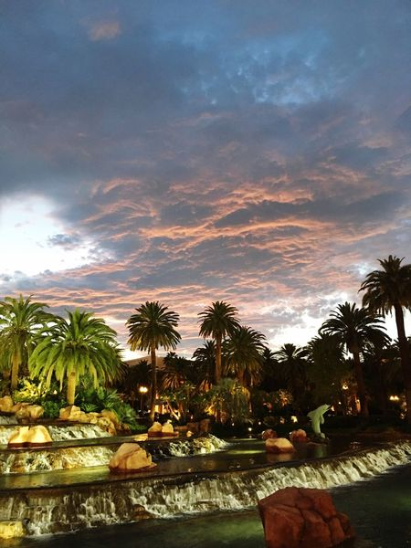 Las Vegas Mirage Hotel Mirage Volcano Cloud - Sky Palm Tree Dolphin Sunset Water No People Sommergefühle
