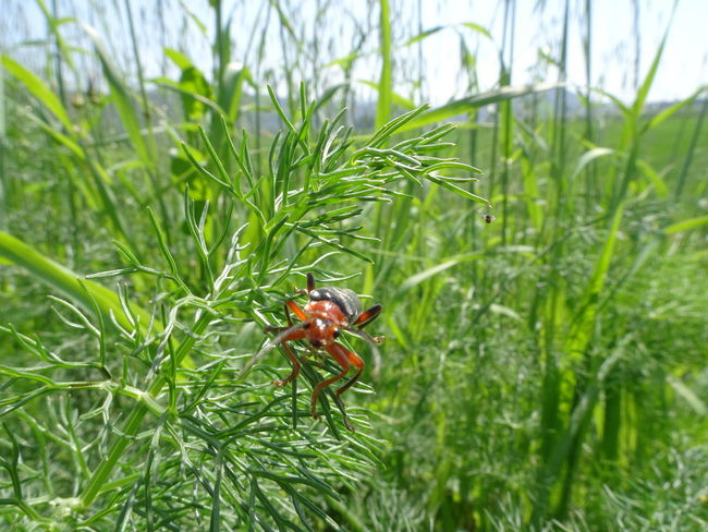 Competition On Food Grass Green Color Insect Land Nature Outdoors Plant