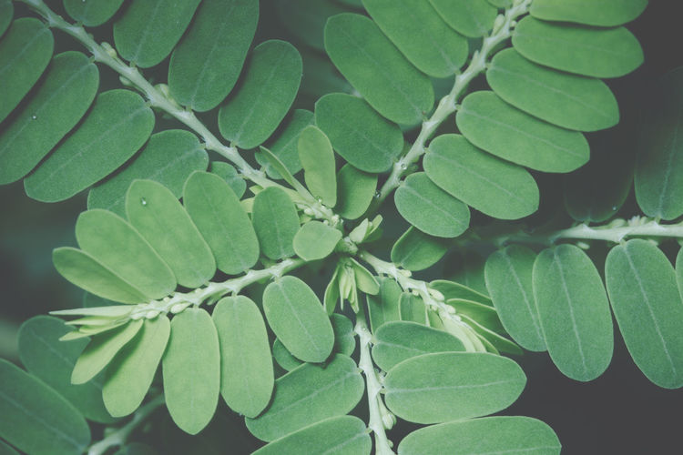 High angle view of fresh green leaves