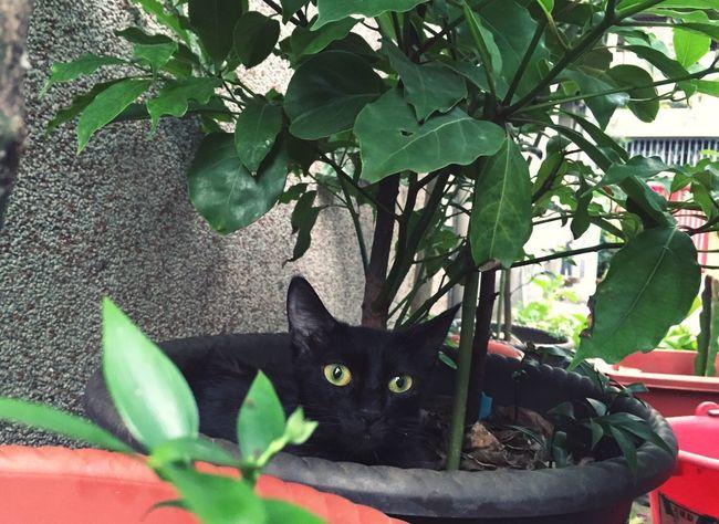 Cute Cat Cute Pets 認養代替購買