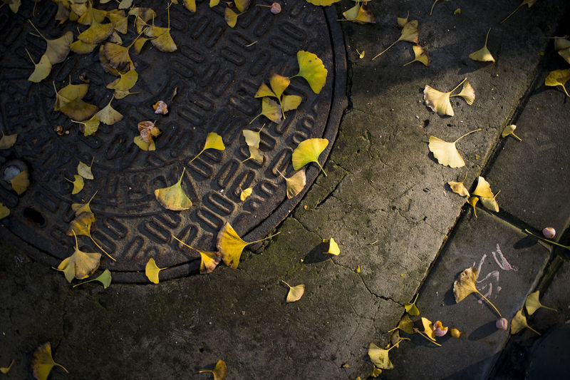 High Angle View Of Fallen Ginkgo Leaves On Street During Autumn