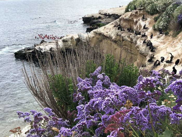 Cormorant Bird Nature Flowering Plant Flower Beach Day Land Beauty In Nature Plant Water High Angle View No People Growth Sea Rock Fragility Sunlight Vulnerability  Outdoors Close-up Purple