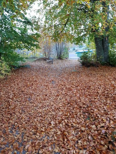 Surface level of dry leaves on footpath in forest