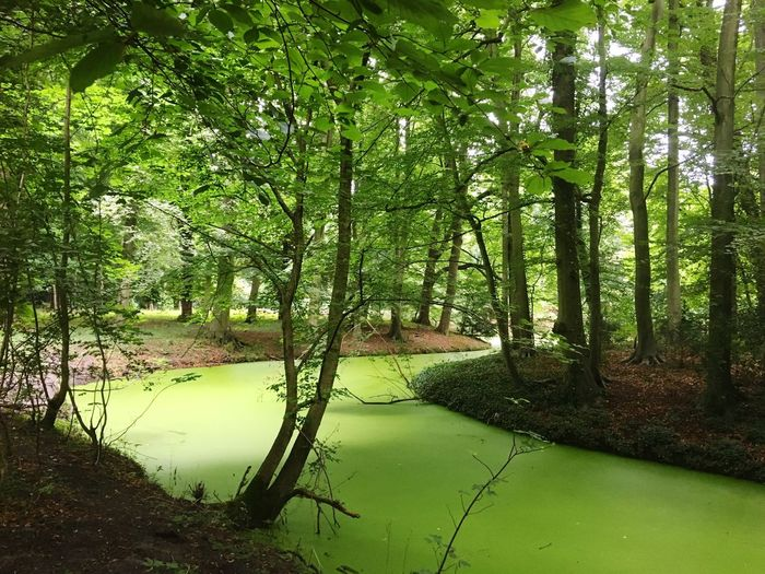 Iphonephotography Forest Woods Pond In Forrest Cloudy Day Green Duckweed Trees Tranquility