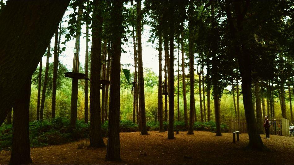 Walking around Delamere forrest. Delamereforest Walking Trees WoodLand Cheshire