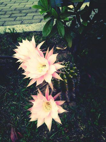 Flowers Cactus Primavera Fiori Fiore Colors Profumo Colori