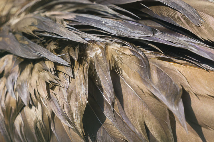 Plumage of a Boat Billed Bird Cochlearius Cochlearius Boat Billed Feathers Nature Sunlight Animals Beauty Bird Boat Billed Heron Brown Close-up Closeup Details Plumage
