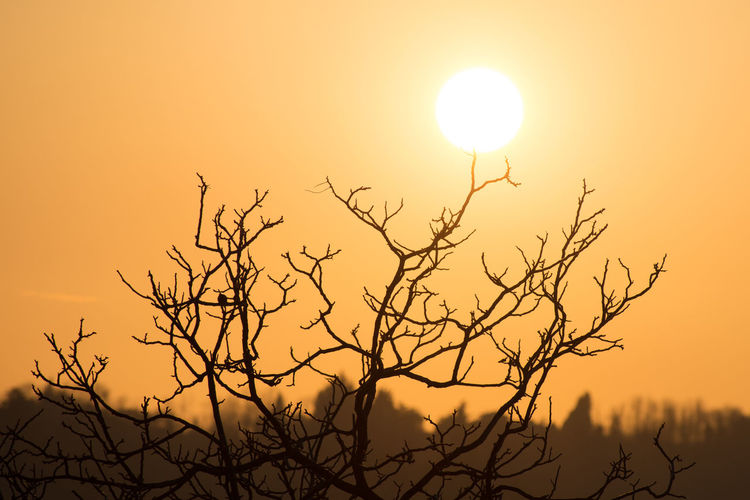 #Contrast #EyeEmNewHere #branches #sun #tree Bare Tree Beauty In Nature Clear Sky Scenics Sky Sunlight And Shadow Sunset Tranquil Scene