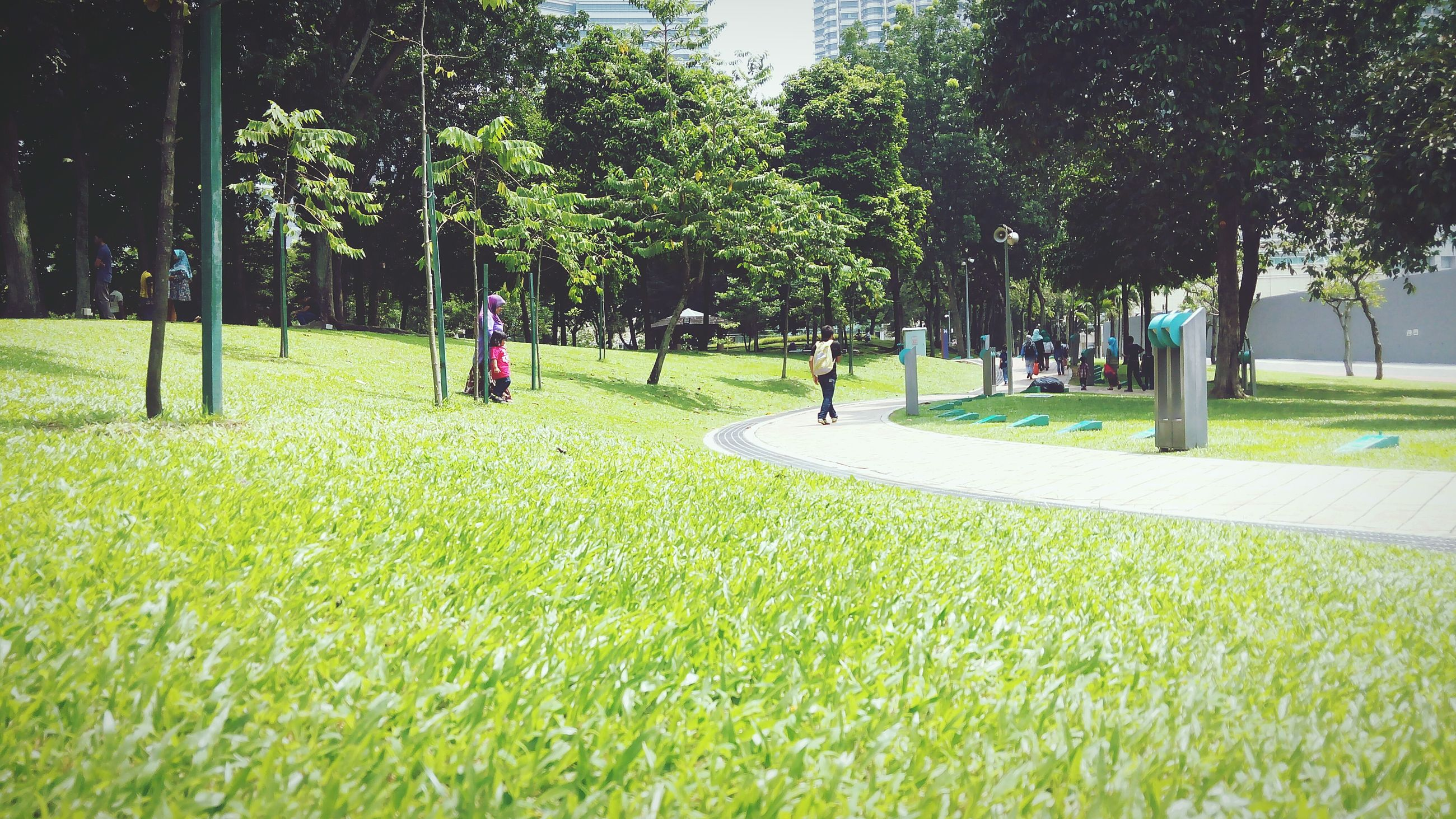 tree, grass, green color, growth, park - man made space, field, nature, tranquility, shadow, sunlight, park, tree trunk, grassy, footpath, beauty in nature, treelined, lawn, day
