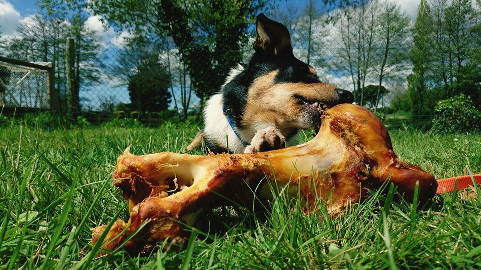 Dog❤ Dog Love Big Bone Green Sky Spring Relaxing Beautiful Day Roef!!